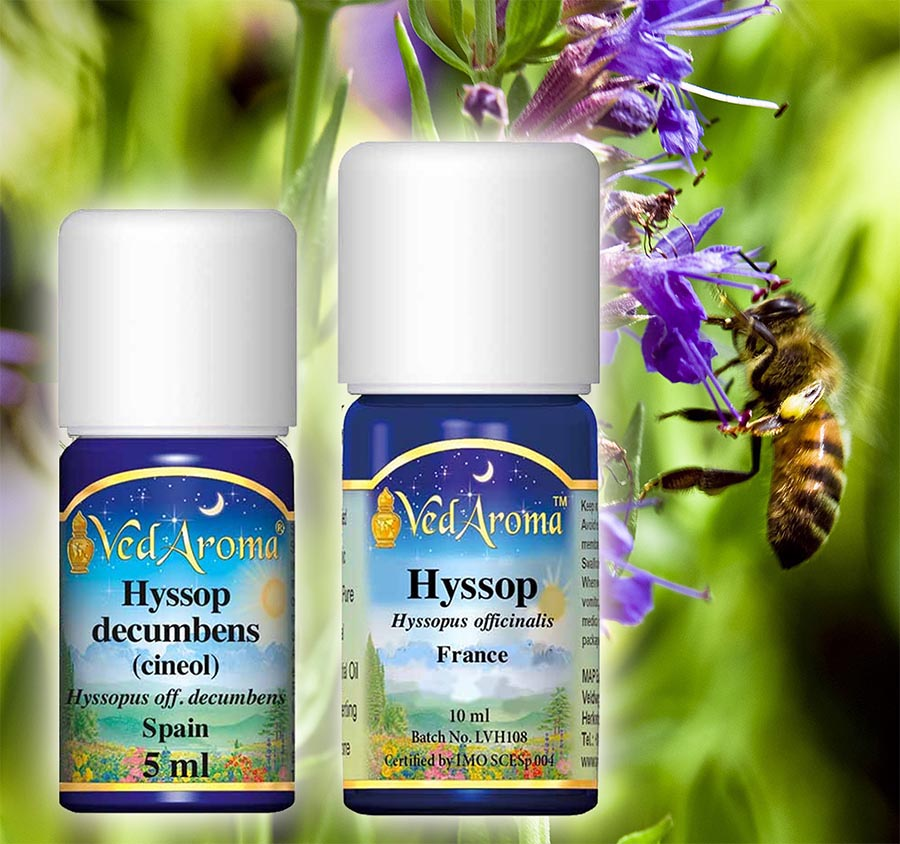 hyssop-essential-oil-hp