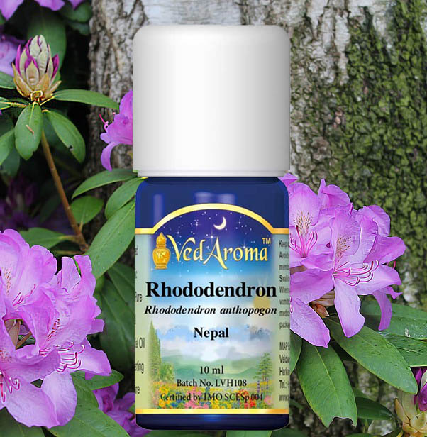 rhododendron-essential-oil-hp.jpg